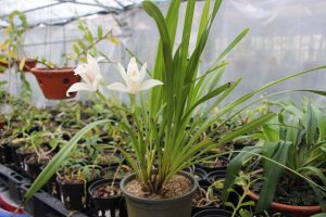 Vườn lan của anh Tuấn có hàng chục loại lan quý hiếm, đột biến, trị giá hàng tỷ đồng/chậu.